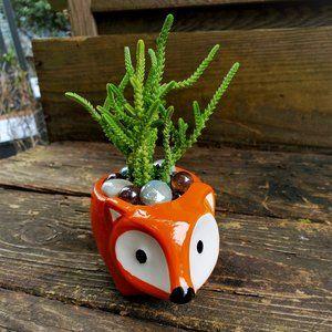 """Succulent in Orange Fox Planter, ceramic pot 5"""""""